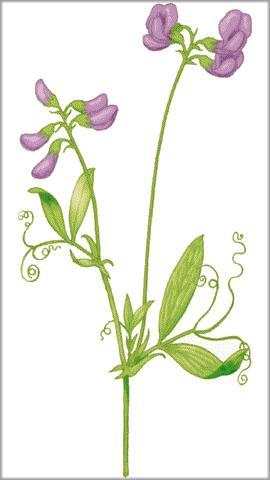 Resultado de imagen de planta guijas